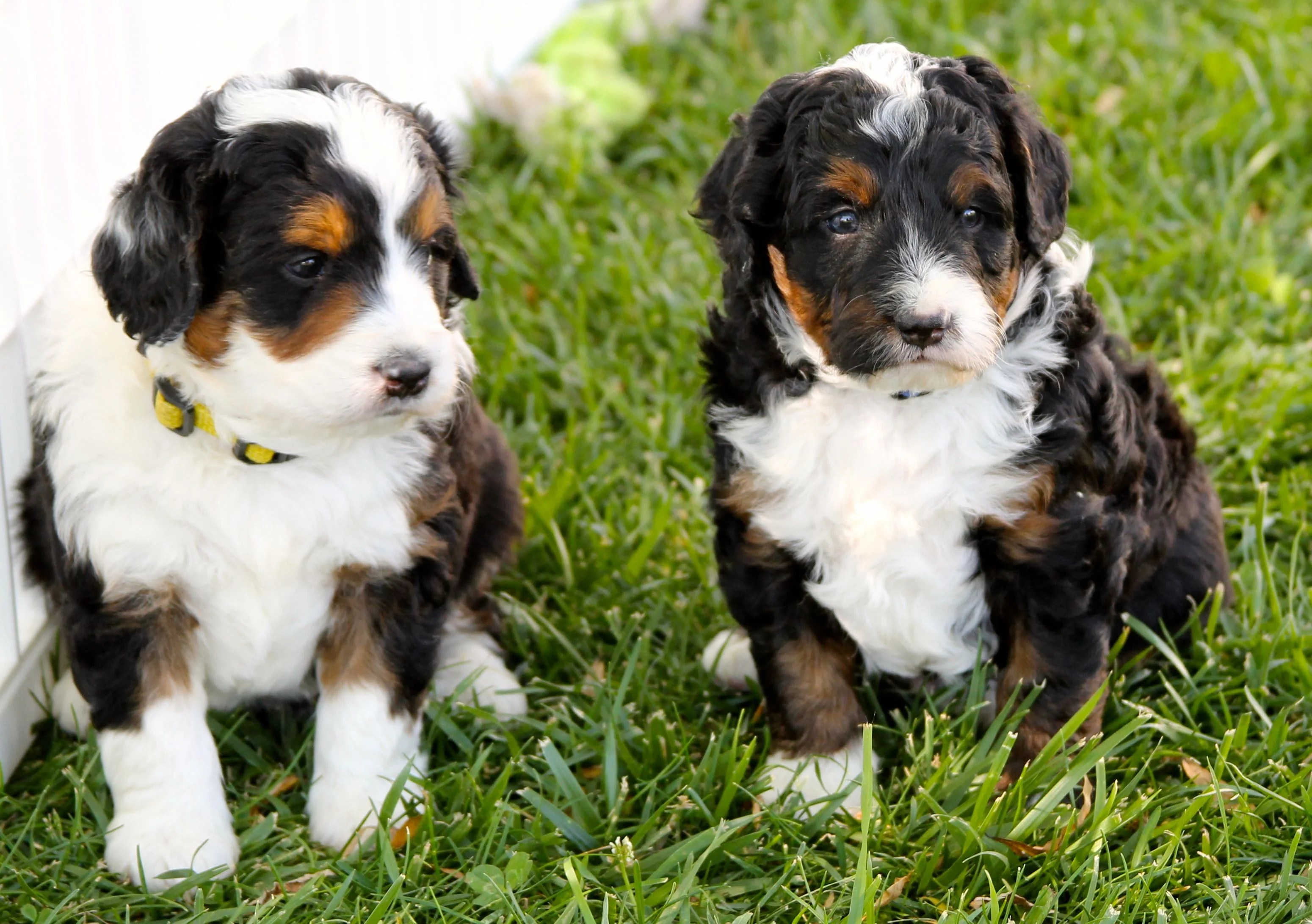 The Truth About Dog Breeding