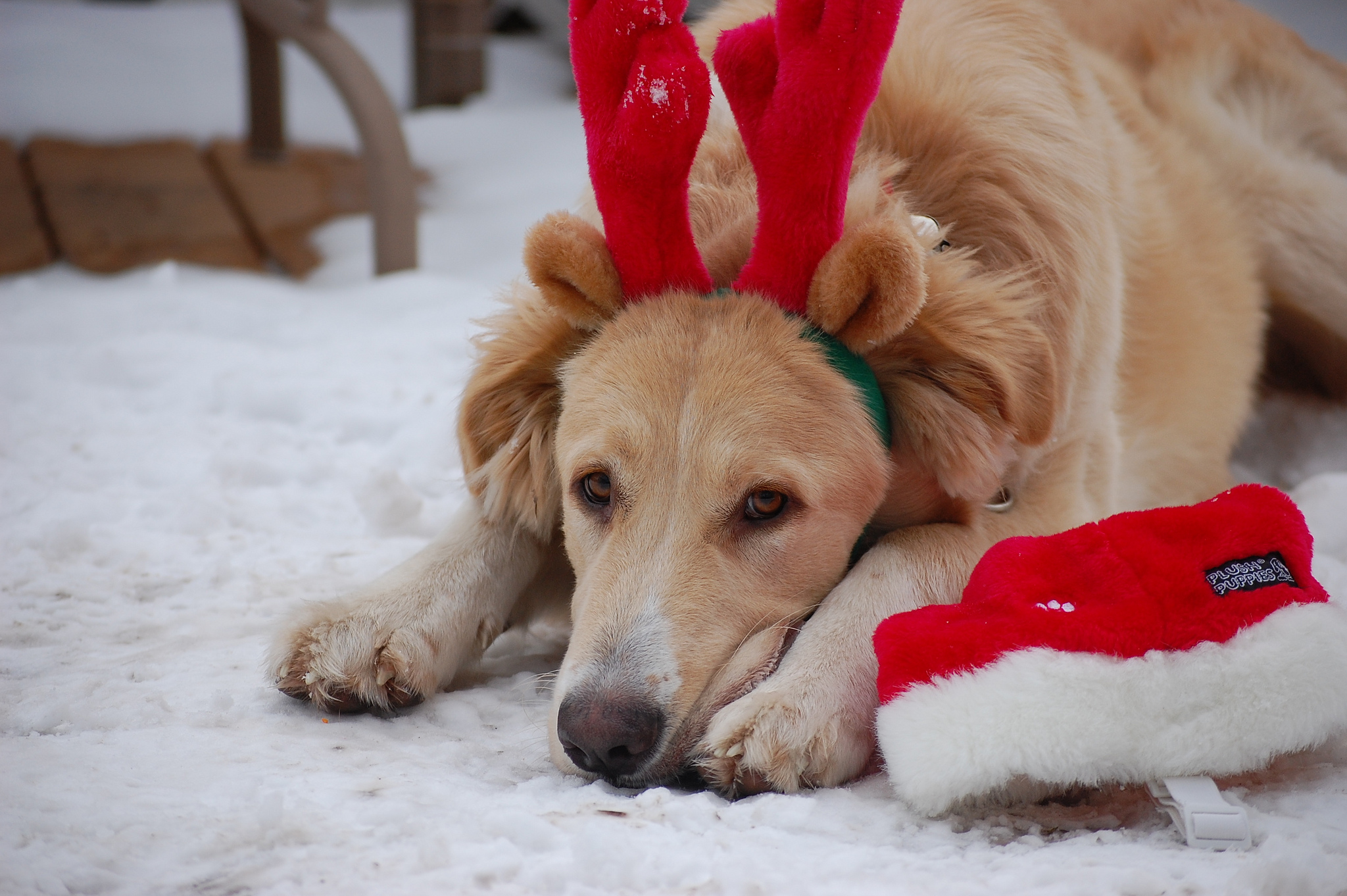 8 Adorable Gifts For Dogs The Cuteness Is Off The Charts