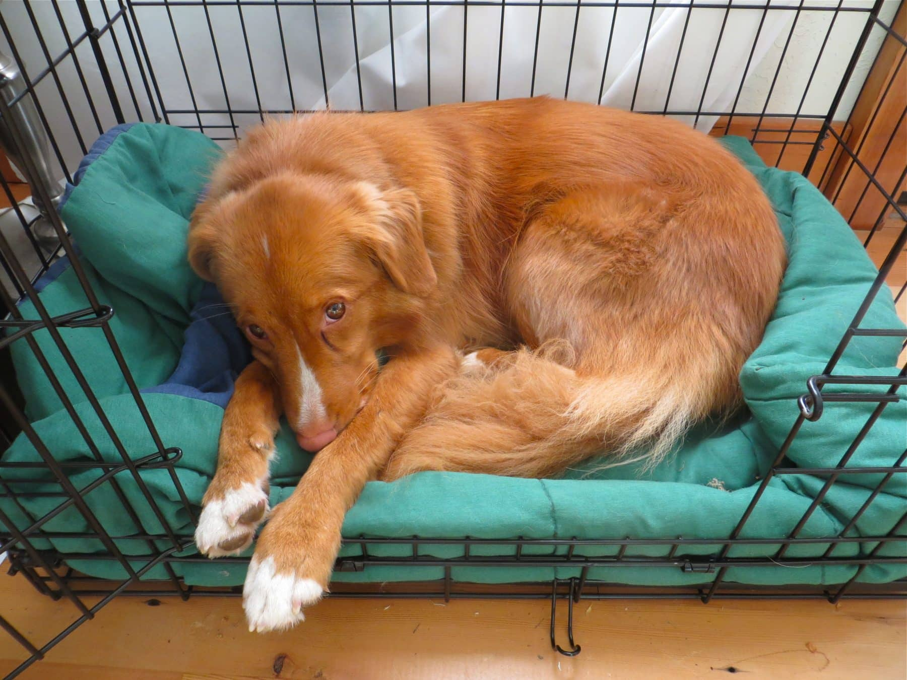 How to Soothe Separation Anxiety in Dogs in 7 Steps