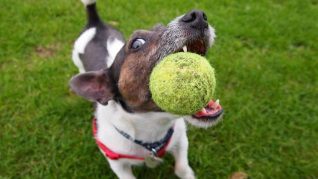 Image result for dog playing fetch