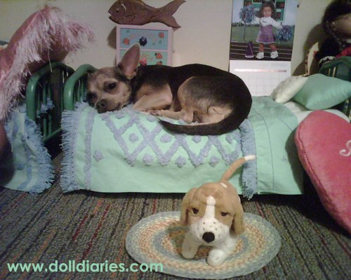 6 Dogs Who Found A Bed That Was Just Right The Dog