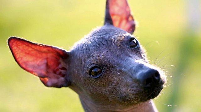 Top 5 Most Popular Female Mexican Dog Names