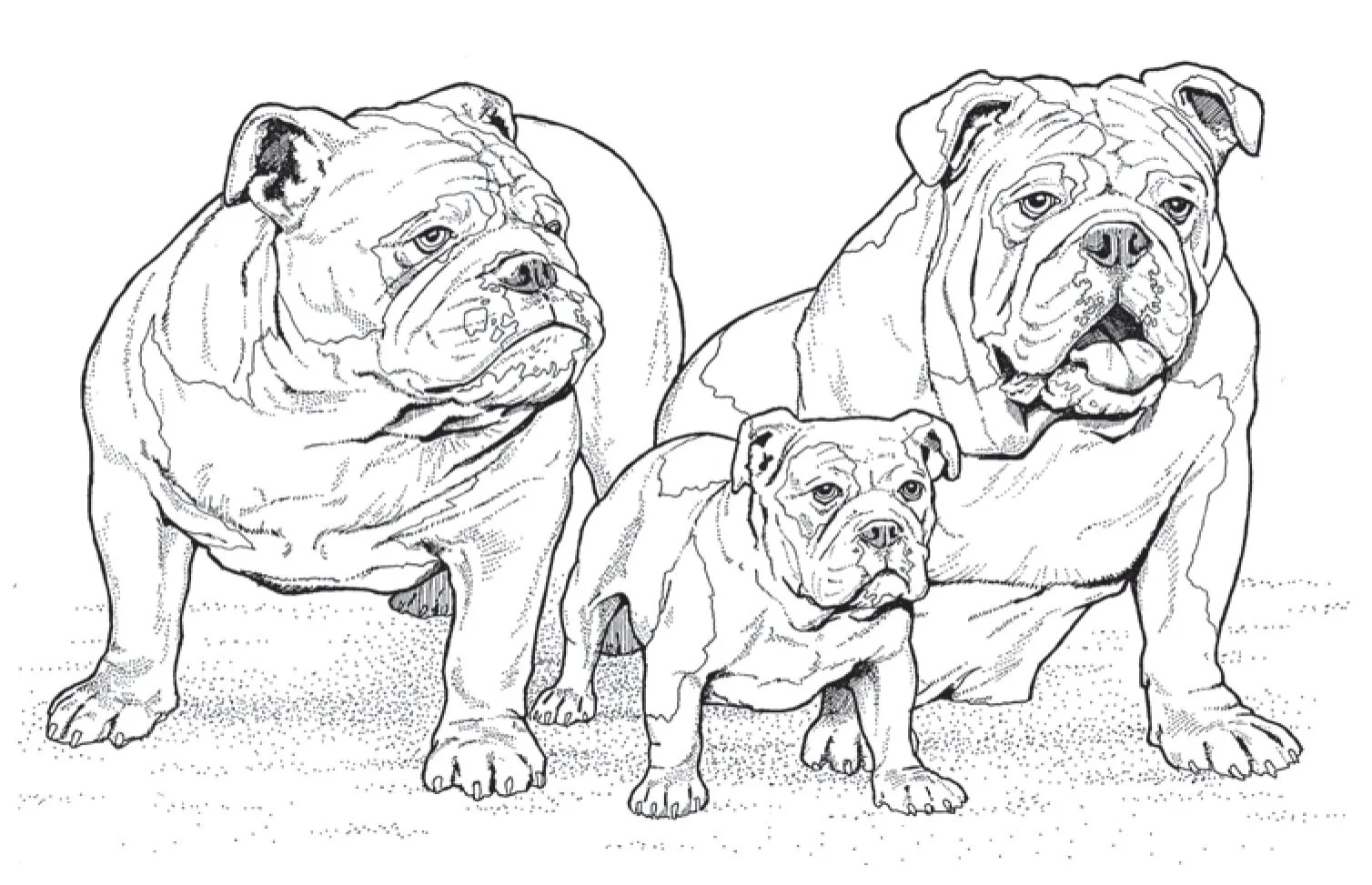 10 New Adult Coloring Books For Dog Lovers To Help Get