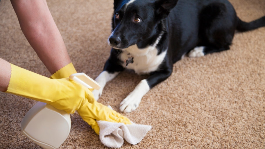 Image Result For How To Get Rid Of Dog Urine Smell From Carpet