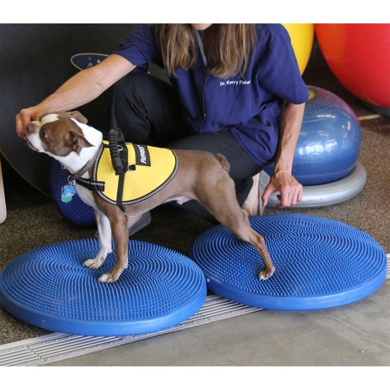 Dog Training Aids and Tools Work! Just Learn How to Use Them