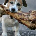 Feeding Dog Bones: What you should know about