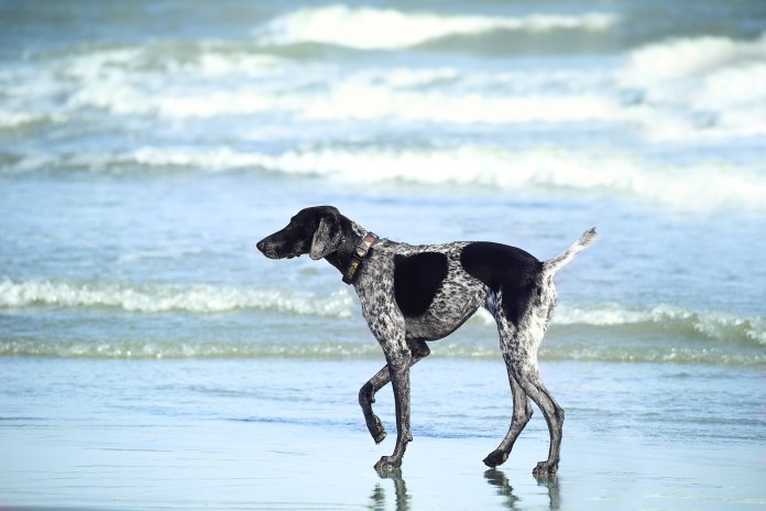 9 Hot Tips for Taking Your Dog to the Beach
