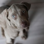 Gray Dog Names The Best Gray Dog Names Of 2019