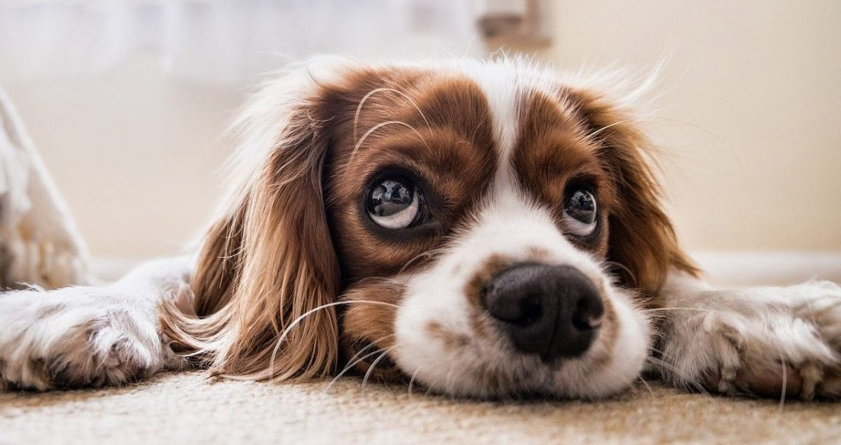 dog pee smell out of carpet how to
