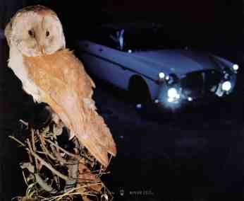 brochure---1968---rover-3½-litre---image---owl-and-coupe-at-night