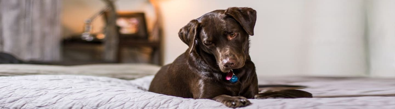 Ισπανική πόλη επιβάλλει φόρο στους ιδιοκτήτες σκύλων