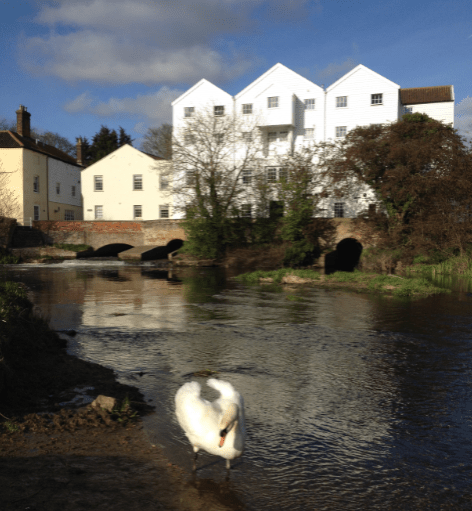 The Old Mill with a Swan on the River Bure Norfolk UK