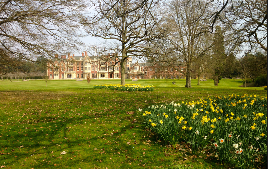 Sandringham Estate Norfolk in Spring 2015 with daffodils in the grounds