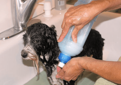 Bathing a dog Pet Sitting Questionnaire