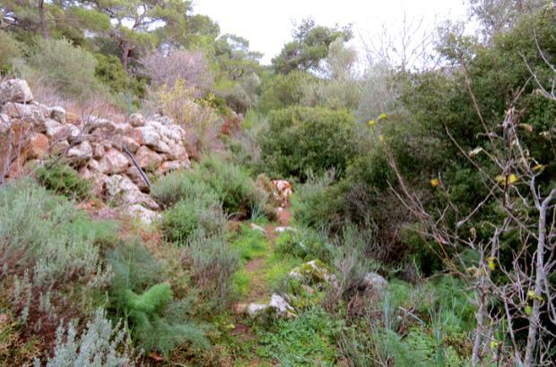 Hiking to Cheese Rock Derekoy