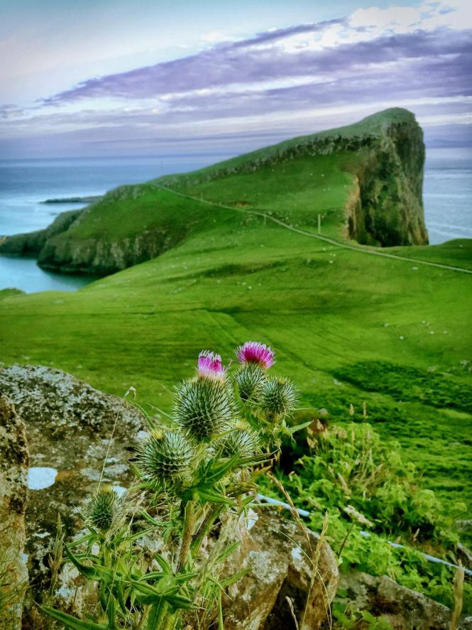 Thistle on Neist Point