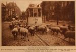 19240925 Schapen op de Boezemweg, verzameling Hans Kaper