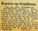19710518 Koeien op trambaan.