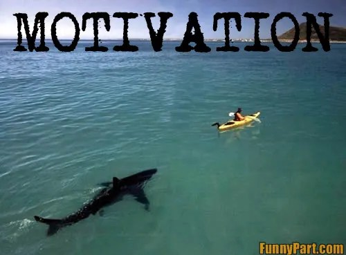 rowing motivation shark ssrs