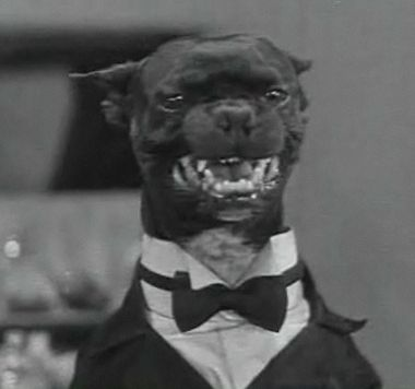 Dogway Melody (1930) - Queenie in Trouble - All Barkie Dogville Comedies