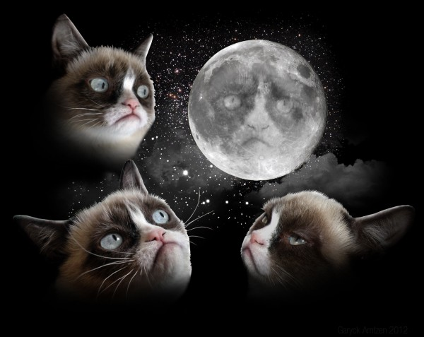 Tard the Grumpy Cat x Three Wolf Moon