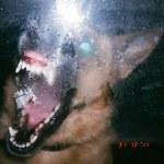 Terrifying Dog Photos - scary, vicious, canines (1)