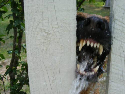 Terrifying Dog Photos - scary, vicious, canines (3)