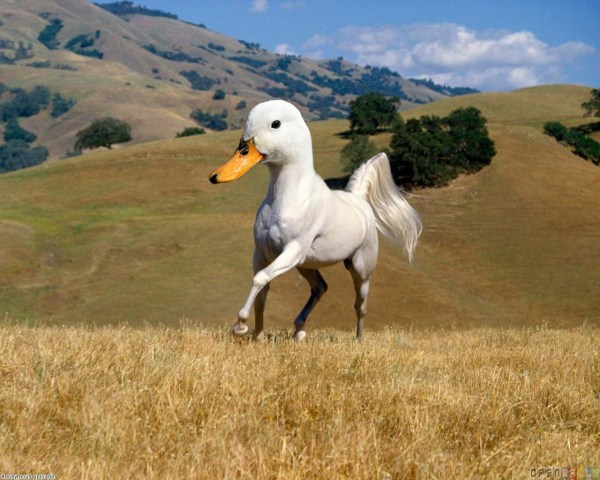 horse with duck head