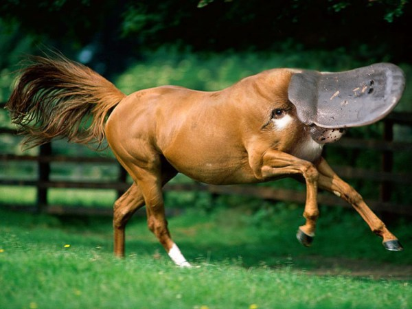 horse with platypus head