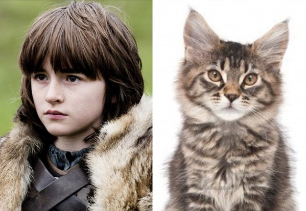 Bran Stark - Game of Thrones Characters as Cats