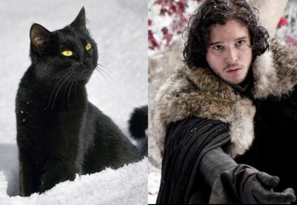 Jon Snow - Game of Thrones Characters as Cats