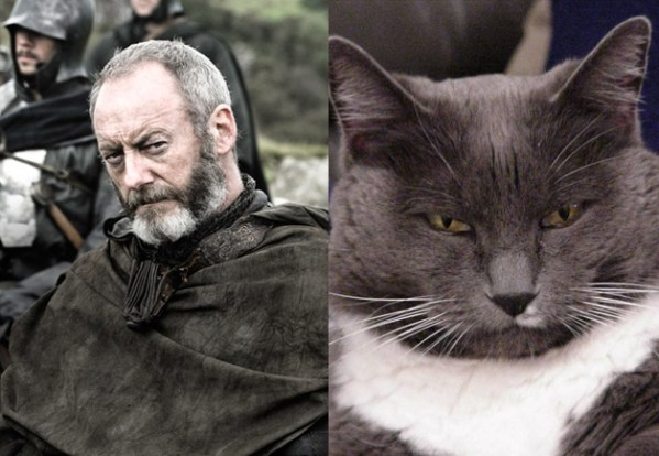 Davos Seaworth - Game of Thrones Characters as Cats