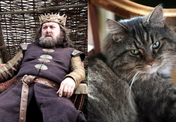 Robert Baratheon - Game of Thrones Characters as Cats