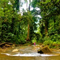 The Best Jungle In The South Pacific? Top 50 Guadalcanal, Solomon Islands Photos