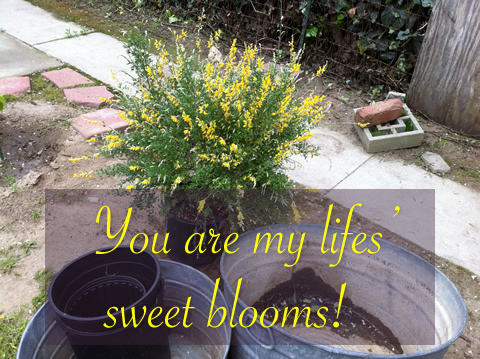 You are my lifes' sweet blooms