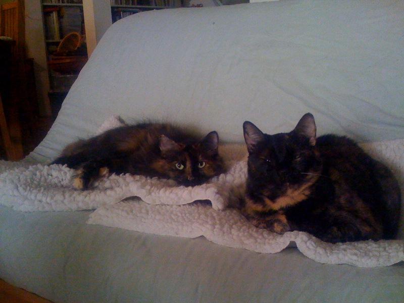 2009.04.cats