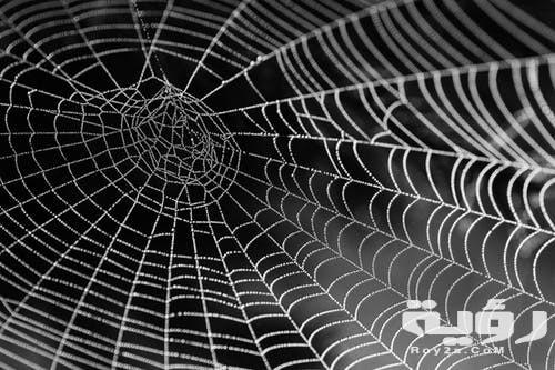 تفسير رؤية خيوط العنكبوت في الحلم موقع رؤية
