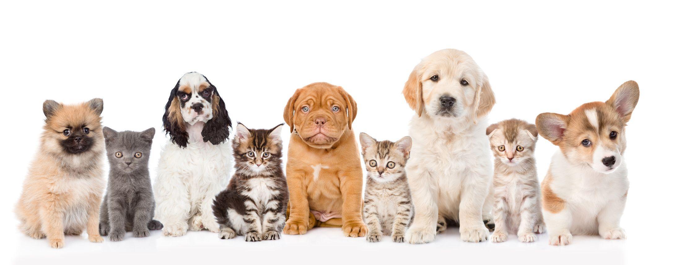 Animals Adopt Animal Hospital Rockville
