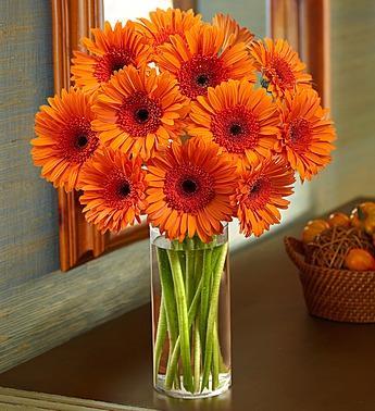 Orange Gerbera Daisy Bouquet Royal Fleur Florist