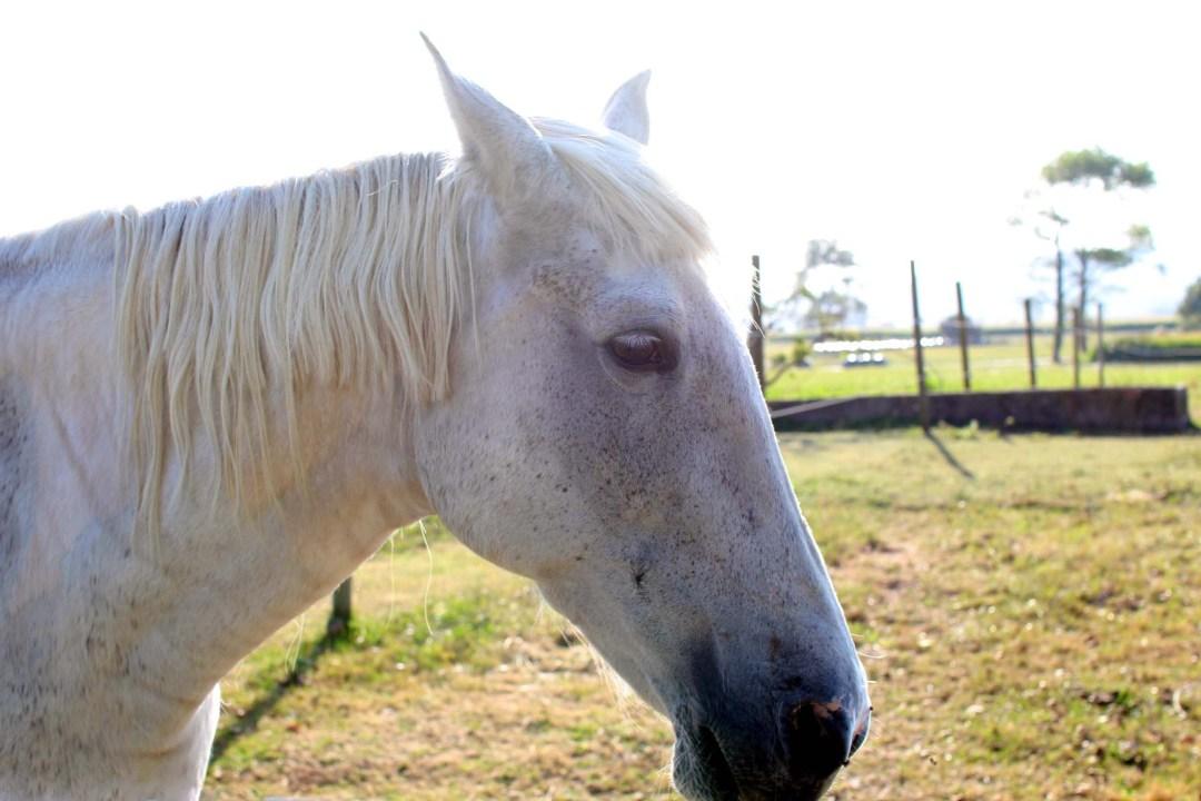 horse langre (2)2