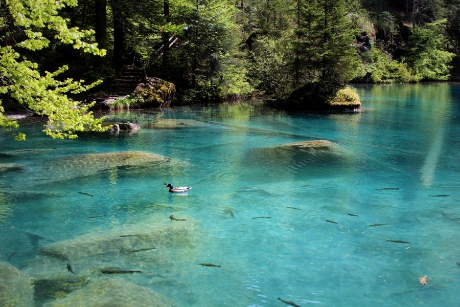 lac bleu_blausee_suisse (4) (900x600)
