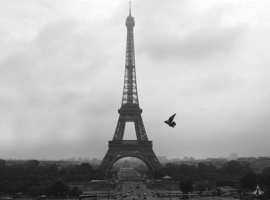 paris-oiseau