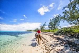 【ハワイで挑戦したい!】大自然を感じるアクティビティ3選