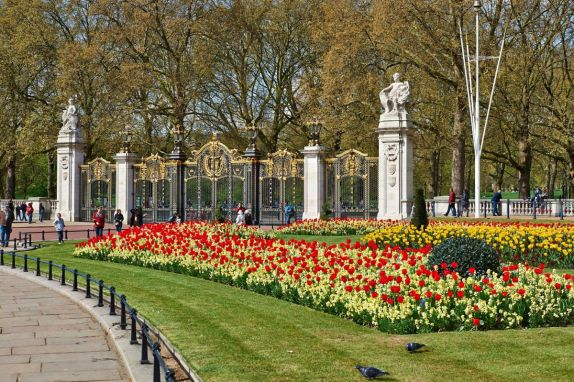 The Tulips of Green Park