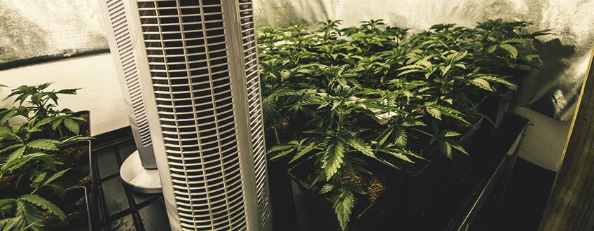 制御-大麻-根-温度