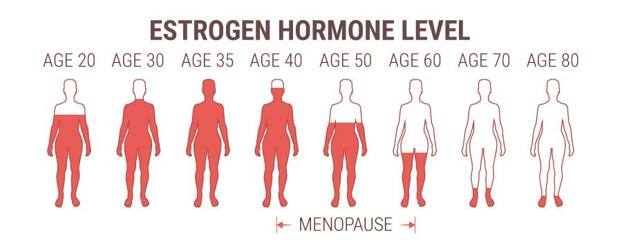 Estrogen Hormone Level