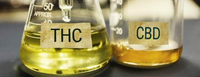 CBD Y THC Cannabis