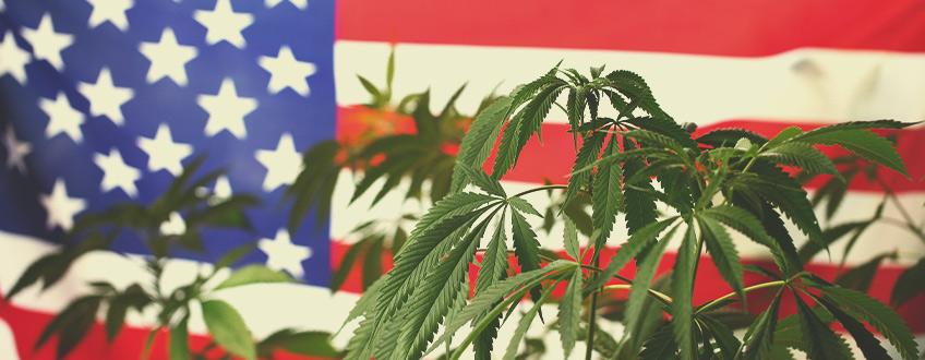 大麻の世界が米国に目を向けるのはなぜですか?