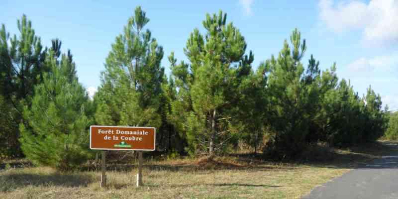 Dans la forêt de la Coubre tout est fait pour éviter un incendie