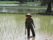 Kampot066